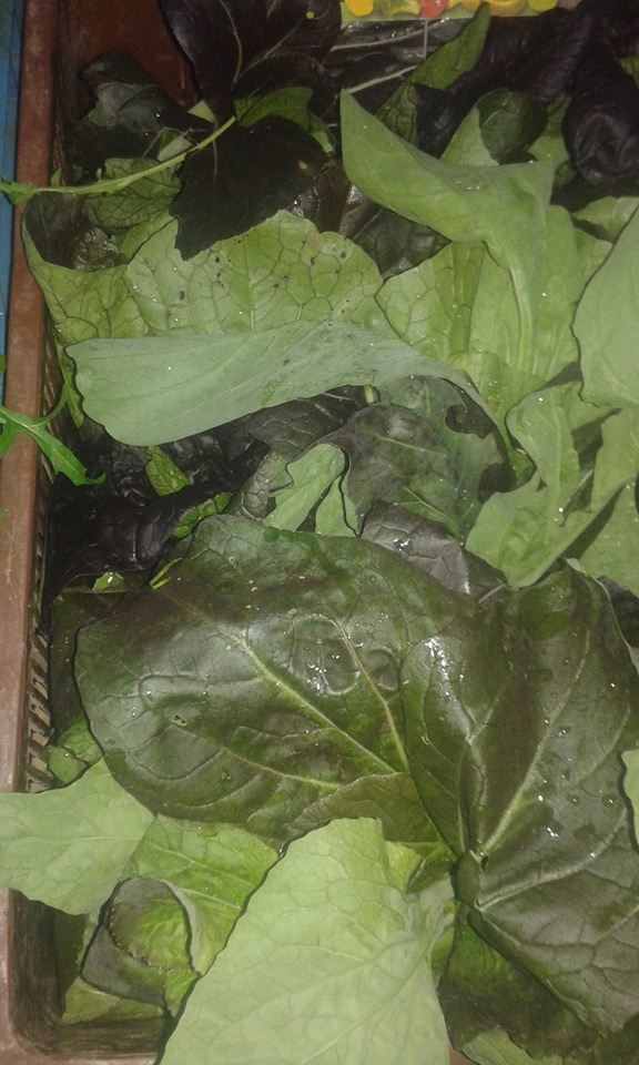 chou kale grand rullecourt 4.30€ le kilo