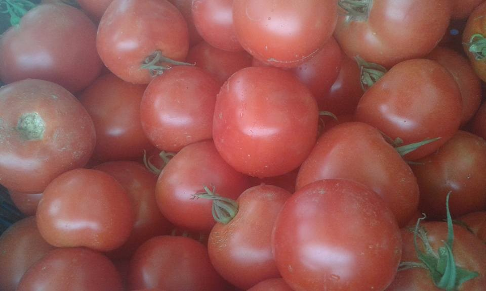 tomate  italie / espagne 4.30 € le kilo