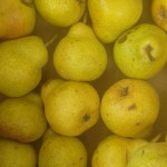 Poire williams france 4.20€ le kilo