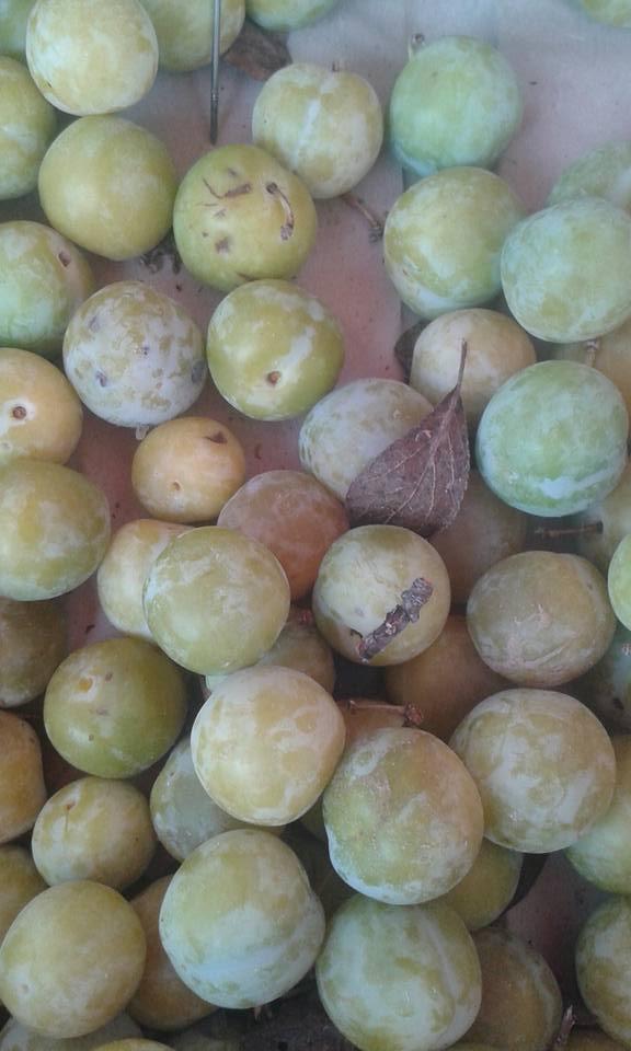 prune reine claude france 6.80€ le kilo