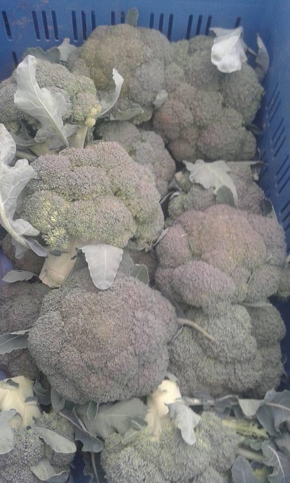 brocoli italie 4.20€ le kilo