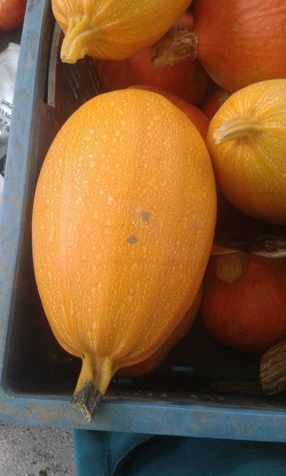 Courge Spaguetti Grand rullecourt 3.20€ le kilo