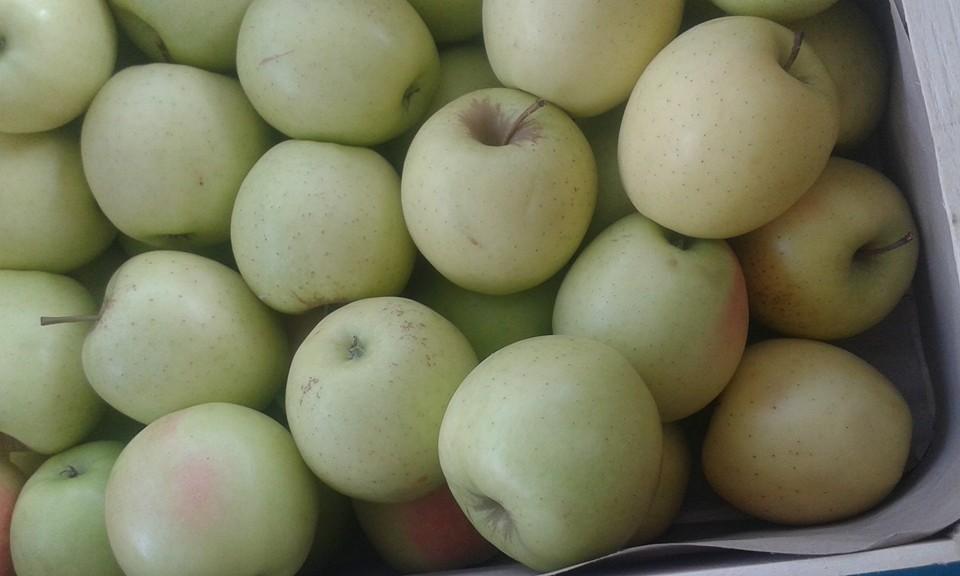 Pomme Goldenrush region 2.80€ le kilo