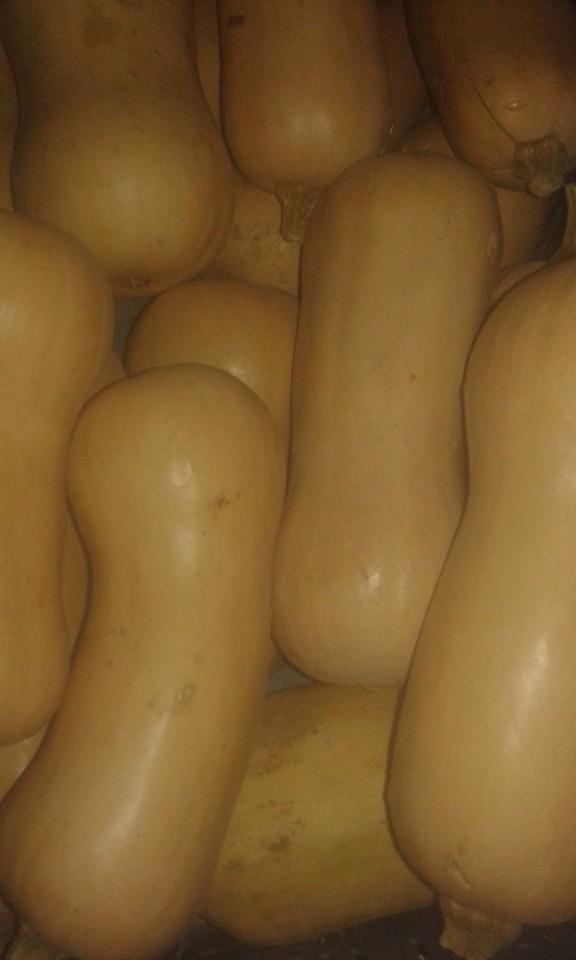 Courge Butternut region 2.90€ le kilo