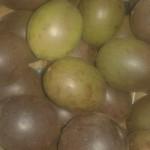 kiwi vert italie 6 pour 2.50€