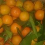 clementine feuille italie 3.95€ le kilo