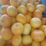 mandarine nadorcot maroc 3.95€ le kilo