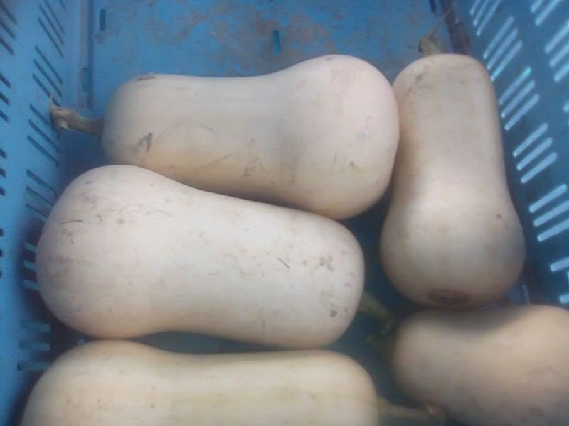 butternut region 3.20€ le kilo