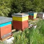 nos amis les abeilles qui permettent la pollinisation