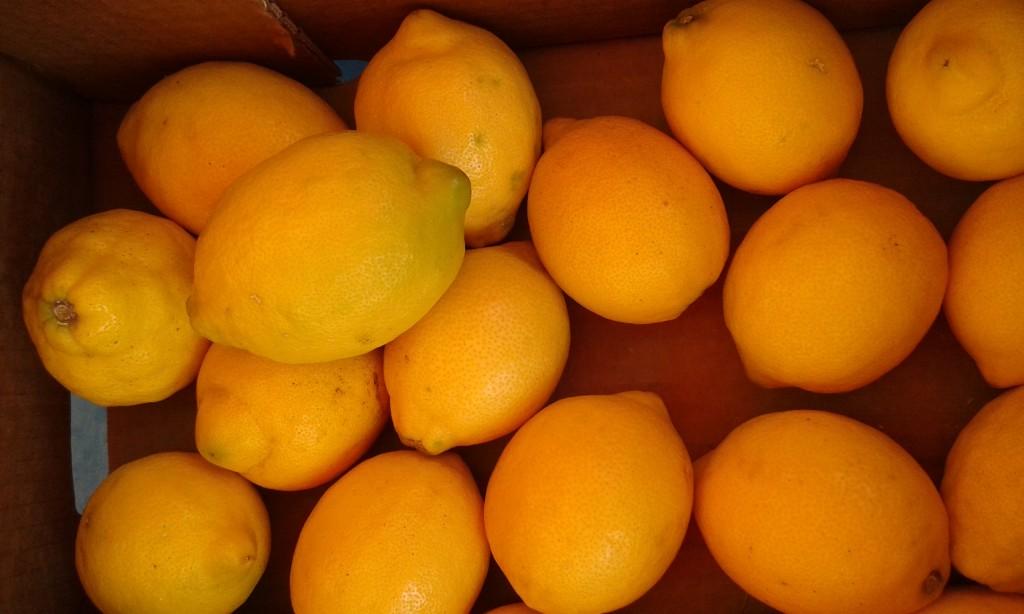 Citron fino primofiore italie 4.20 le kilo