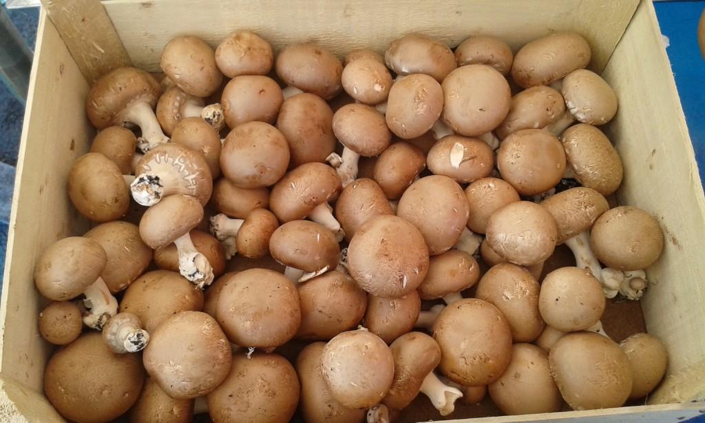 Champignon blond région 9.90€ le kilo
