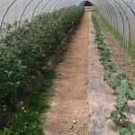 parc des tomates et des concombres