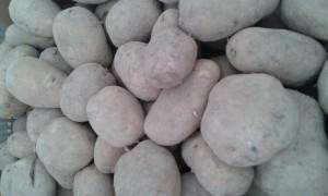 pomme de tere vapeur region 2.20€ le kilo