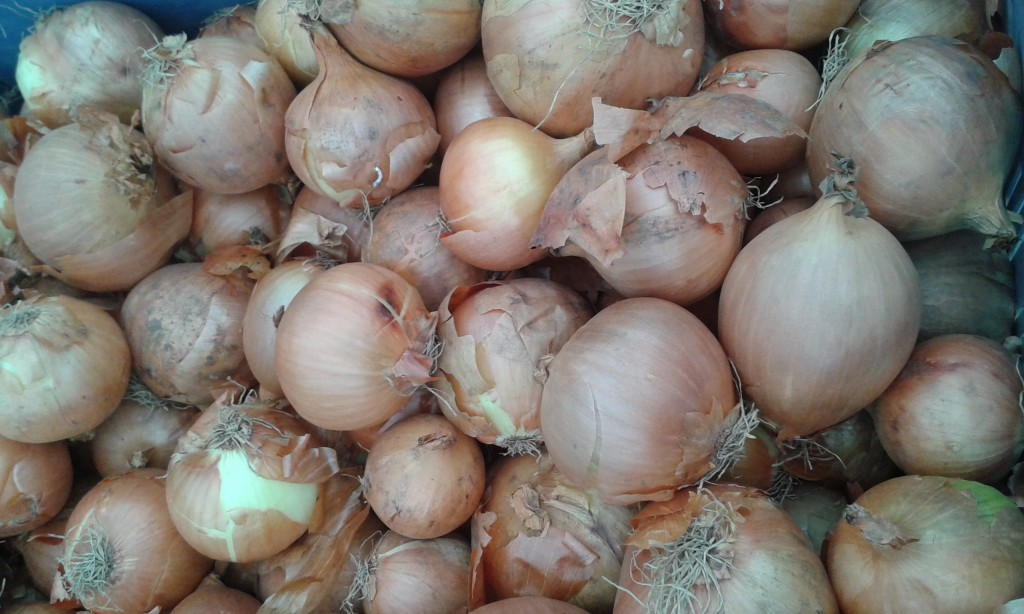 Oignon jaune Grand Rullecourt 1.90€ le kilo