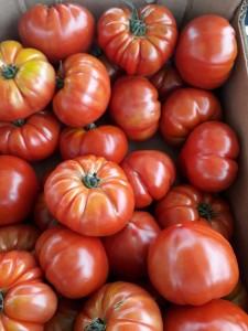 Tomate marmande rouge esp 4.10e le kilo