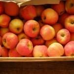 pomme  melorse/ idared region  2.80€ le kilo