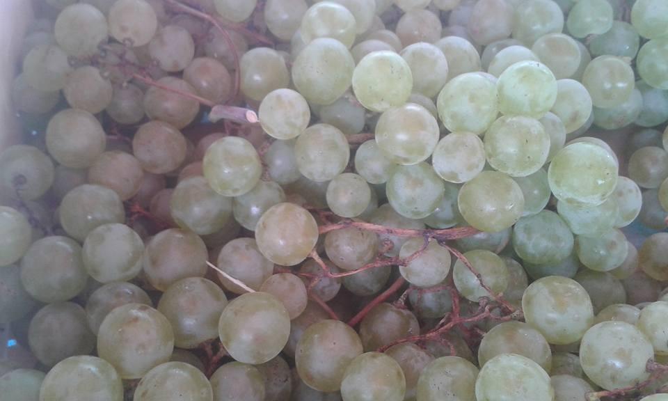 Raisin blanc exalta  7.80€ le kilo