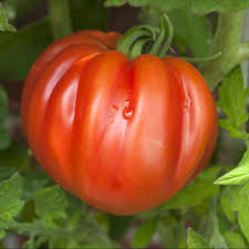tomate coeur de boeuf 5.20€ le kilo
